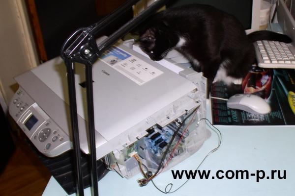 Ремонтируем принтер. Мастер-Кот.