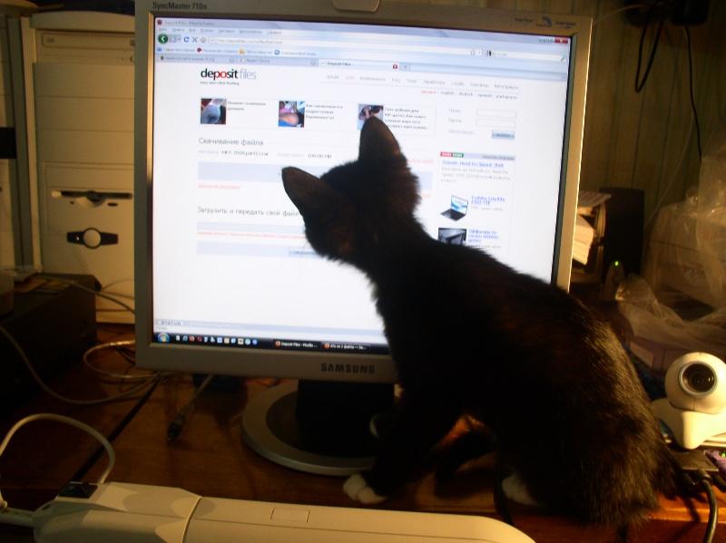 Даже коту интересно.