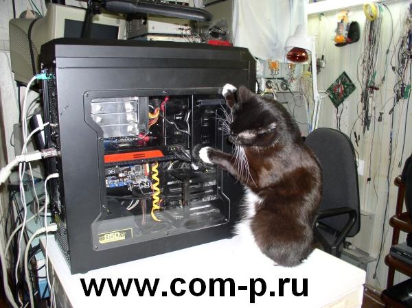 Черный кот и черный компьютер.